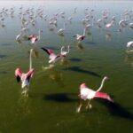تالاب گاوخونی, طبیعت شگفتانگیز و افسانهای در ایران +تصاویر