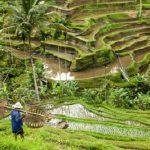 راهنمای سفر به بالی و تمام نکاتی که باید بدانید+تصاویر