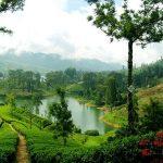 خرید سوغاتی در سفر به سریلانکا +تصاویر