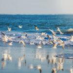 سفر به جزایر خلیج فارس زیبا ترین خلیج ایران