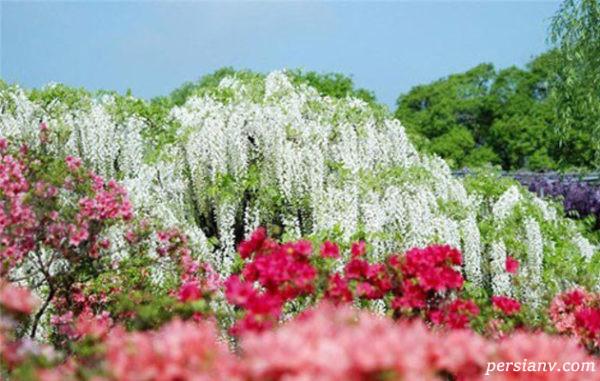 باغ کاواچی فوجی