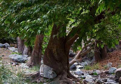 سفر به هند کوچک ایران+تصاویر