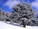 توصیههایی برای مسافران زمستانی