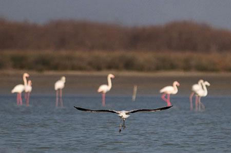 دریاچه مهارلو فارس+تصاویر