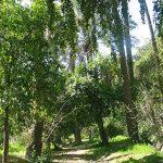 باغ خان خوزستان جایی که حتما باید دید+تصویر