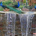 تهرانگردی آخرهفته در باغ پرندگان+تصاویر