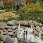 سیری در باغ پرندگان تهران !+تصاویر