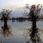 «مرداب استیل» جاذبه طبیعی آستارا+تصاویر