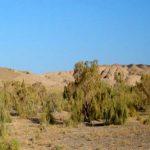 کویر مرنجاب در آران و بیدگل+تصاویر