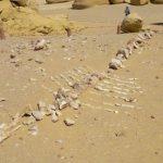 دهکده نهنگ ها در مصر + تصاویر