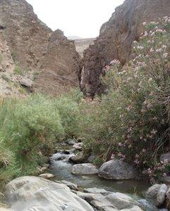 آبشارهای دره سختی جاذبه ای متفاوت در کرمان+تصاویر