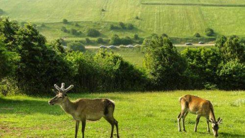 جنگل فندقلوی ,جنگلی بکر و زیبا که طبیعتی بسیار زیبا و جذاب دارد+تصاویر