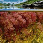 رودخانه ای بسیار شگفت انگیز که رنگین کمان در خود دارد+تصاویر