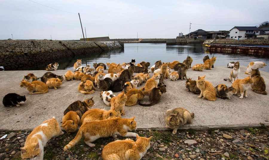 مکانهای مناسب دوستداران حیوانات
