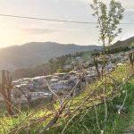 قابی از طبیعت زیبای بهار و تابستان را در روستای کزج ببینید