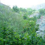 بوستان گلابدره تهران ییلاقی دیدنی برای گردشهای تابستانه