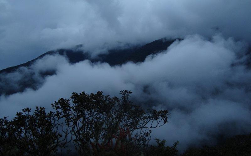 جنگل ابری پرو