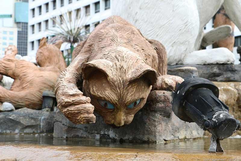 کوچینگ شهر گربه ها