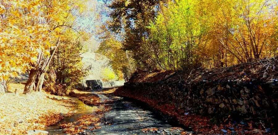 فریاد های شبانه از عمق جنگل سربرج مشهد