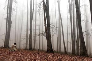 گردش آخر پاییز در شگفتی های جنگل راش ساری
