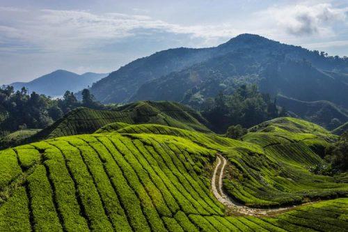 جاذبه های گردشگری مالزی