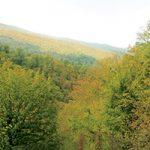 جنگل اولنگ شاهرود یکی از زیباترین جنگلهای ایران