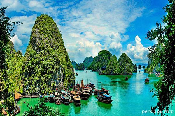 ۱۱ گیاه و جانور جدید در ویتنام