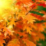 به چه دلیلی برگهای درختان تغییر رنگ می دهند؟