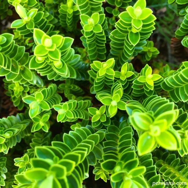بیماری گیاهان