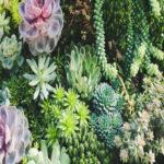 آیا میدانید گیاهان نیز هنگام بیماری گریه میکنند؟