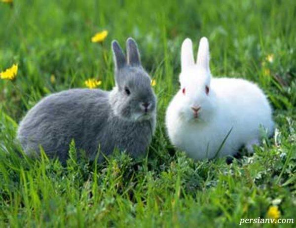 مراقبت از خرگوش