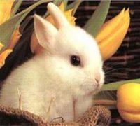 آشنایی با انواع خرگوش ها و نحوه ی نگهداری از آنها