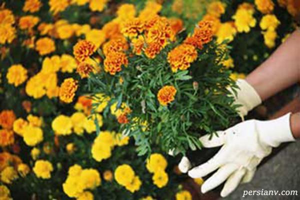 آشنایی با چگونگی نگهداری گیاهان آپارتمانی