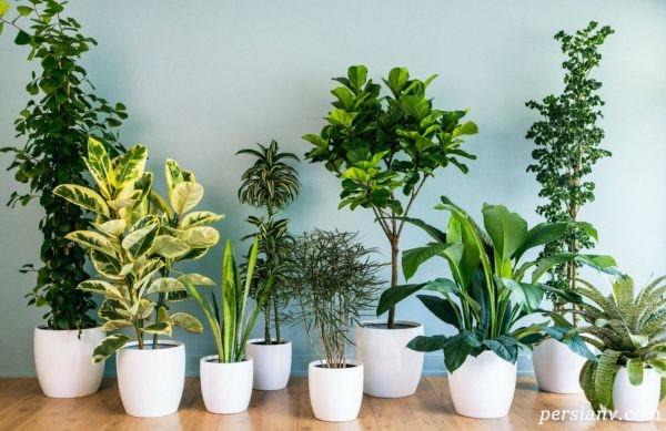 چگونگی نگهداری گیاهان آپارتمانی