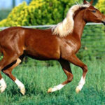 اسب و هر آنچه که در مورد این حیوان نمیدانستید