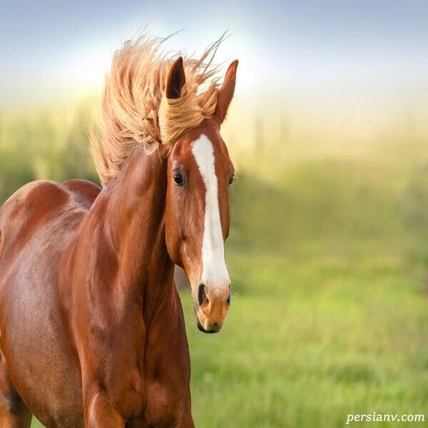 درباره اسب