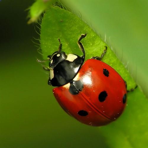 حشرات مختلف با زیستگاه مختلف / کدام حشرات مفید و کدام مضر هستند؟