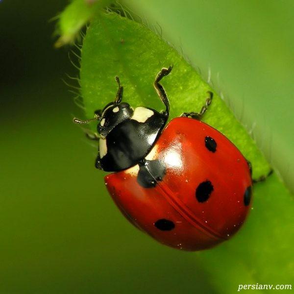 حشرات مفید و مضر