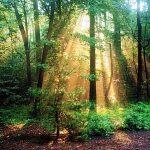 رشته تکنولوژی جنگلداری و شغل آینده آن را بشناسید