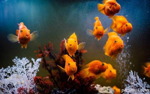 تغذیه ماهی های آکواریومی