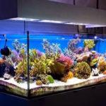 ماهی های آکواریومی ، شرایط تغذیه و نگهداری آنها