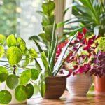 گیاهان آپارتمانی برای تصفیه هوا را بشناسید + تصاویر