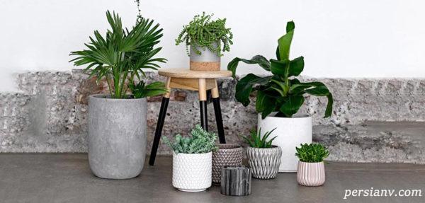 گیاهان آپارتمانی برای تصفیه هوا