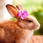 خرگوش و نحوه ی زیست و نگهداری این حیوان اهلی + تصاویر