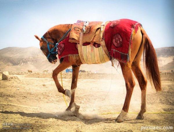 اسب و نژادهای مختلف این حیوان نجیب + تصاویر