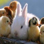 نگهداری از حیوانات خانگی را بیاموزیم