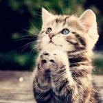 گربه و نگهداری اصولی از آن + تصاویر
