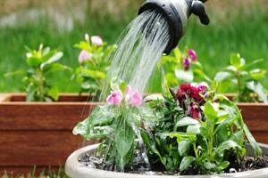 گیاهان آپارتمانی را چگونه آبیاری کنیم تا شاداب بمانند؟