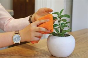 گیاهان آپارتمانی را چگونه تمیز کنیم؟