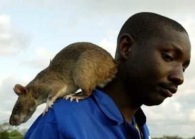 دانستنیهایی درباره موش ها